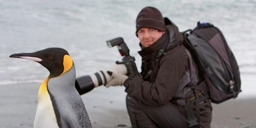 penguin-Salisbury%20Plain%2C%20South%20Georgia%20