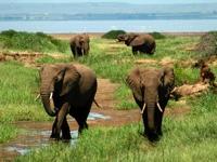 Travel to Tanzania for a Safari – Episode 27