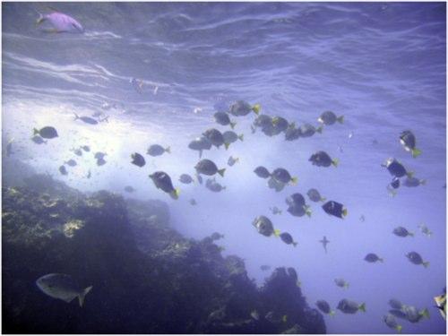 Santa Maria Bay snorkeling