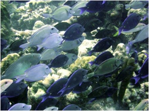 fish%20in%20bonaire