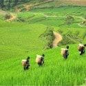 Women of the Black H'mong Hill Tribe – Vietnam – Photo