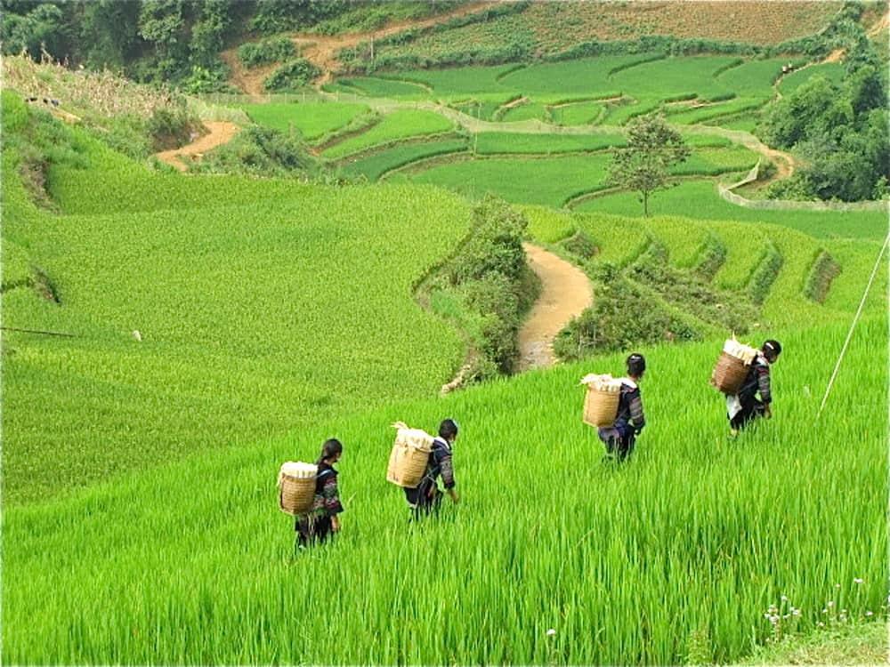Women of the Black H'mong Hill Tribe - Vietnam - Photo