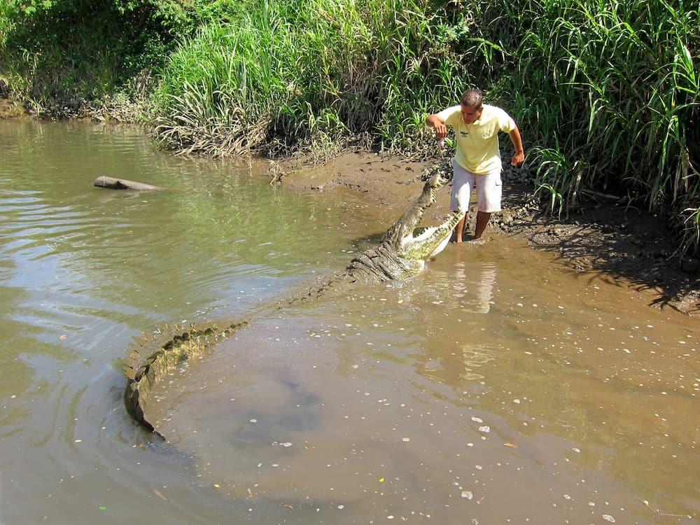 Crocodile River Tour Costa Rica