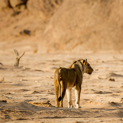 Travel to Namibia's Skeleton Coast – Episode 466