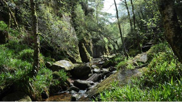 Cairngorms Ulusal Parkı - İskoçya