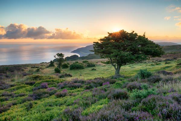 Exmoor Ulusal Parkı - İngiltere