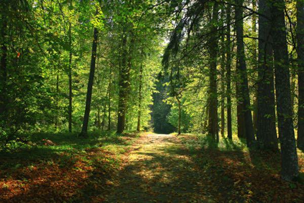 Yeni Orman Milli Parkı (İngiltere)