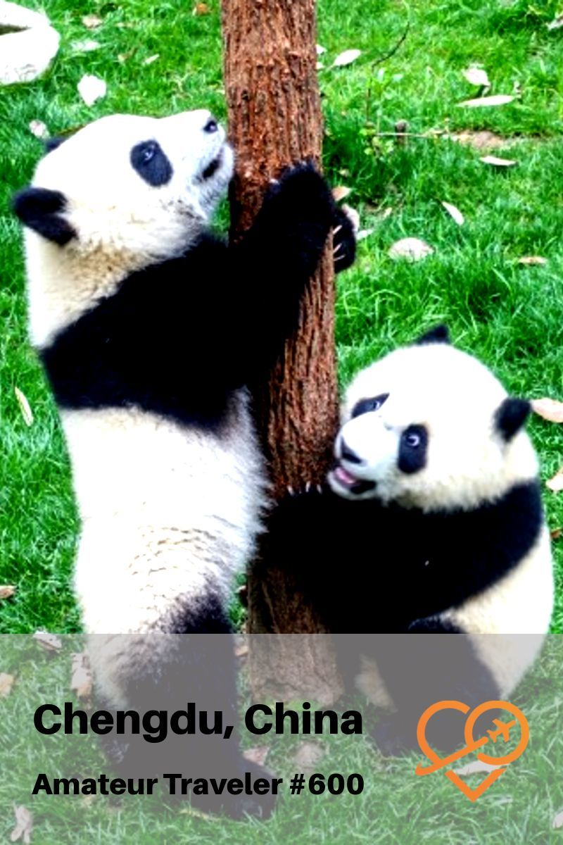 VIsiting Pandas in Chengdu, China - Travel to the capital of Sichuan (Szechuan) (Podcast)