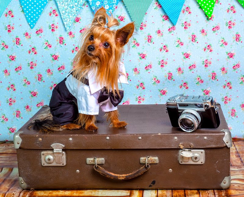 10 tips for how to travel with a dog on a plane amateur for Traveling on a plane with a dog
