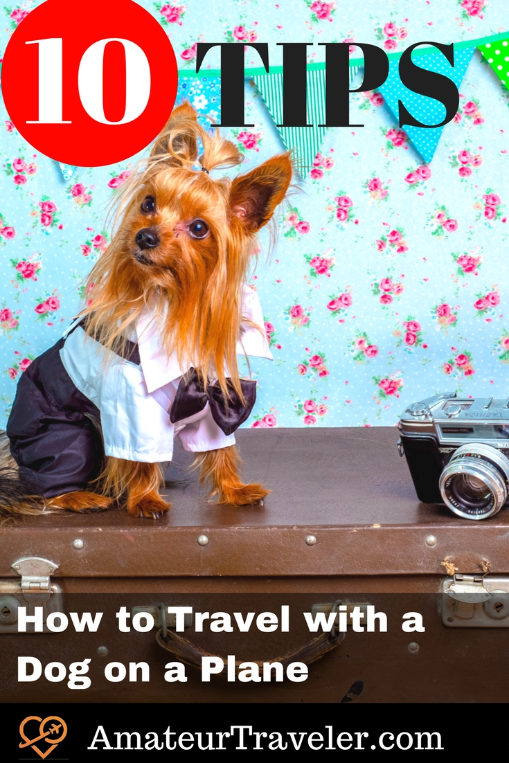 10 Tips for How to Travel with a Dog on a Plane