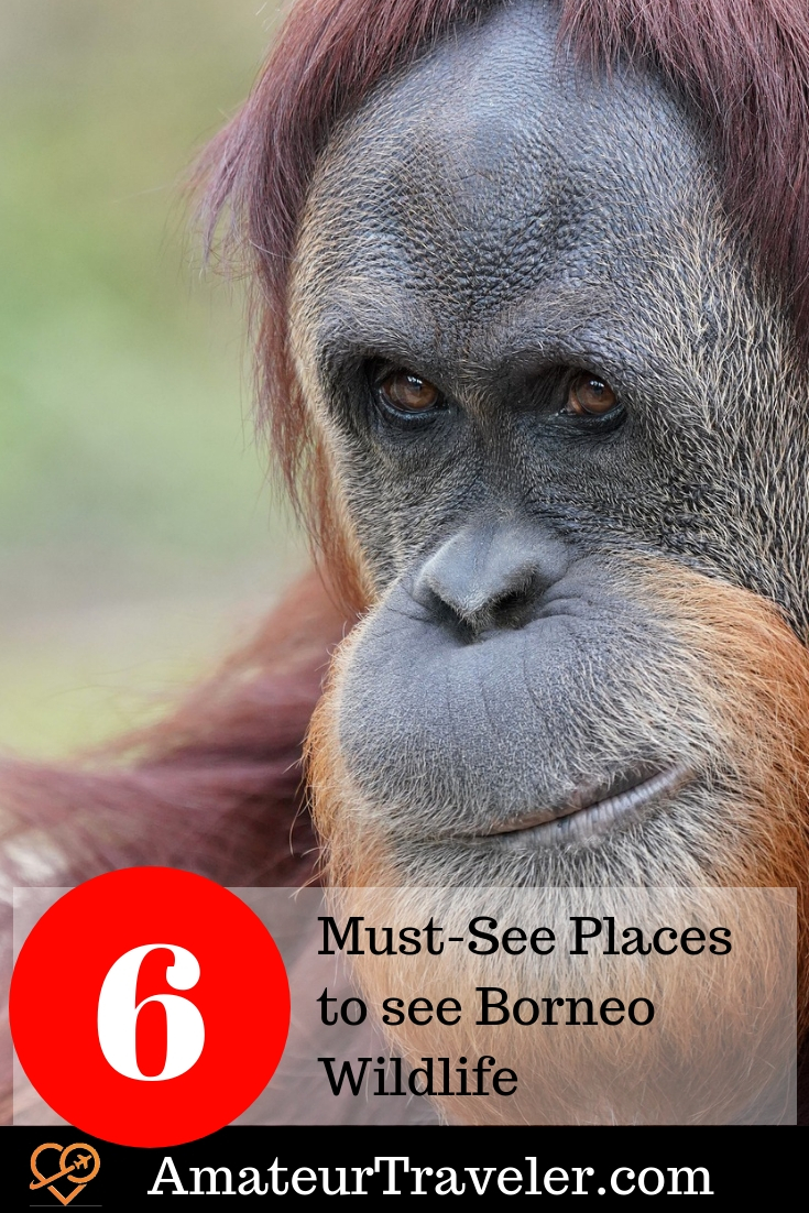 6 Must-See Places to see Borneo Wildlife #broneo #travel #wildlife #indonesia