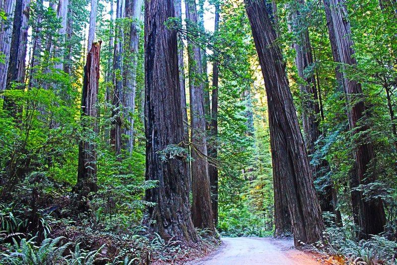 Redwood Ulusal Parkı