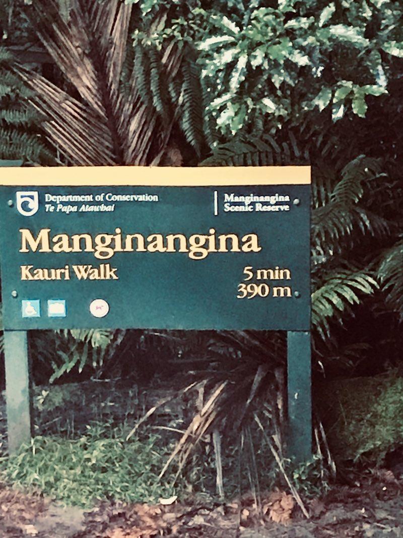 Manginangina yürüyüşü - Puketi Ormanı