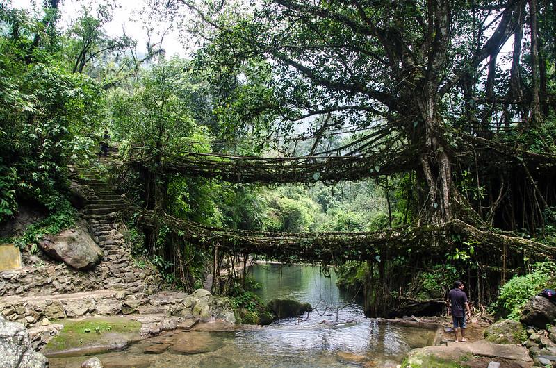 Çifte Kök Köprü, Nongriat