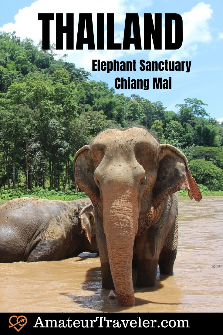 Elephant Sanctuary - Chiang Mai, Thailand #travel #trip #vacation #volunteer #volunteering #chiang-mai #thailand #elephant #elephants #thingstodoin