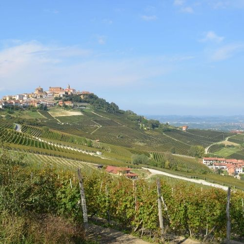 Piedmont Wine Tours – Langhe Wine Region