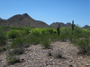 Phoenix Arizona – Inner-City Desert Hike