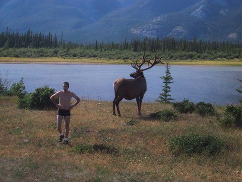 Stupid Tourist and Elk, Alberta, Canada – Photo